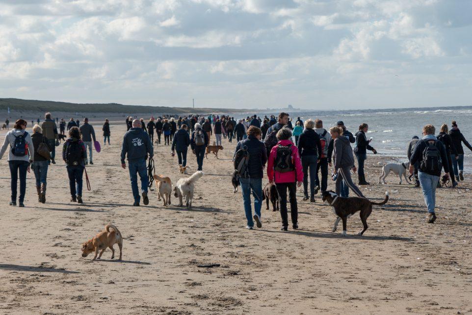 Succes! Bijna 1.000 wandelaars én honden op pad voor Hulphond Nederland