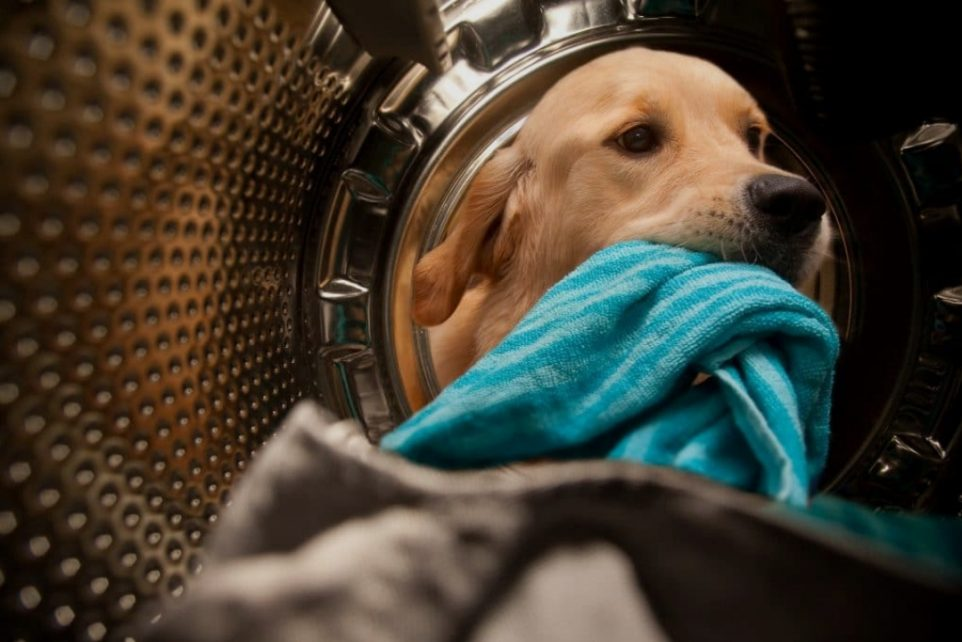 The Dutch Service Dogs Foundation and P5COM Join Forces
